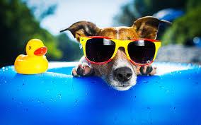 Vybíráme sluneční brýle